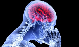 Чего мы не знаем о головном мозге?